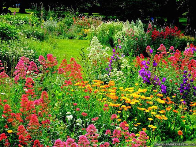 An Herb Garden