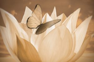 Yoga Nidra: Graceful Transitions Teacher Training